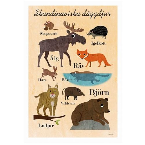 scandinavian anmal